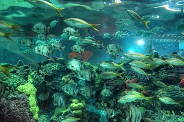 Ripley's Aquarium of Canada Opening