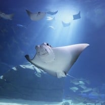 Photo: Ripley's Aquarium Toronto