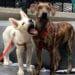 """Фото со странички группы Sochi Dogs - Happily After  в """"Фейсбуке"""""""